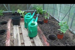 Gewächshaus bepflanzen - so geht es richtig