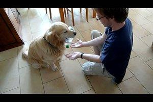 Apportieren - Schritt für Schritt den Hund trainieren
