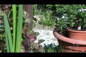 Blumentopf richtig bepflanzen