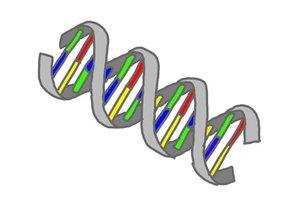 Aufbau der DNA einfach erklärt