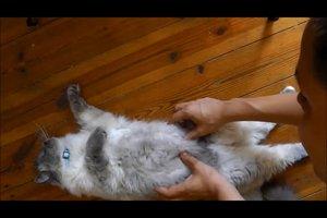 Katzen massieren - so fühlen sie sich wohl