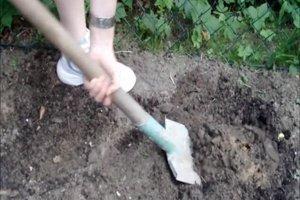 Anleitung - Kartoffeln anpflanzen