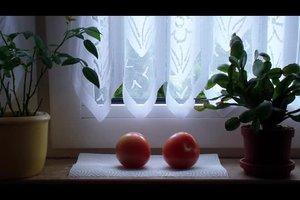 Tomaten nachreifen lassen - so funktioniert's