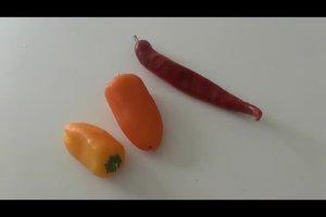 Wann sind Peperoni reif? Das ist zu beachten