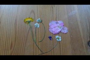 Blumen pressen und trocknen - so geht's