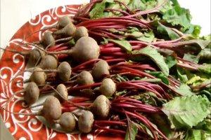 Rote-Beete-Blätter - essen statt kompostieren