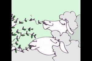 Was essen Schafe - so füttern Sie sie artgerecht