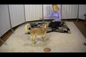 Hundebeschäftigung im Haus - so fordern Sie Ihren Hund auch geistig