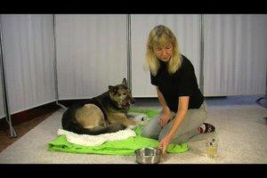 Kamillentee für Hunde – so lindern Sie Beschwerden