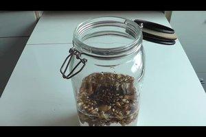 Walnusslikör - Rezept zum Selbermachen
