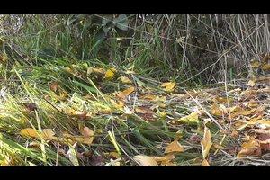 Im Herbst Blätter trocknen - so geht's