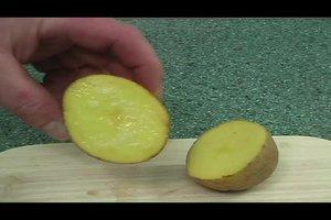 Experiment mit einer Kartoffel - warum Salz Flüssigkeit entzieht