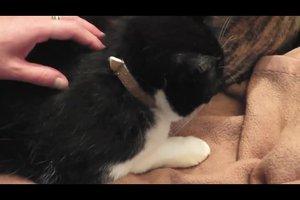Flohhalsband für Katzen - so wirkt es richtig
