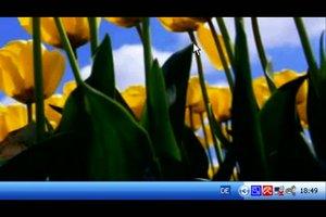Wie kopiere ich Fotos vom PC auf einen USB Stick?