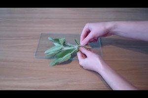 Salbeitee: die Zubereitung mit losen Blättern gelingt so