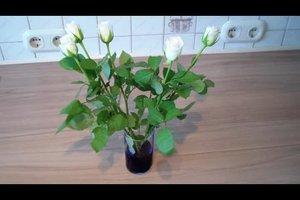 Blaue Rosen selber herstellen