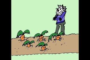 Karotten pflanzen - so gelingt's