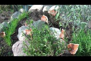 Kräuterschnecke bepflanzen - so geht's